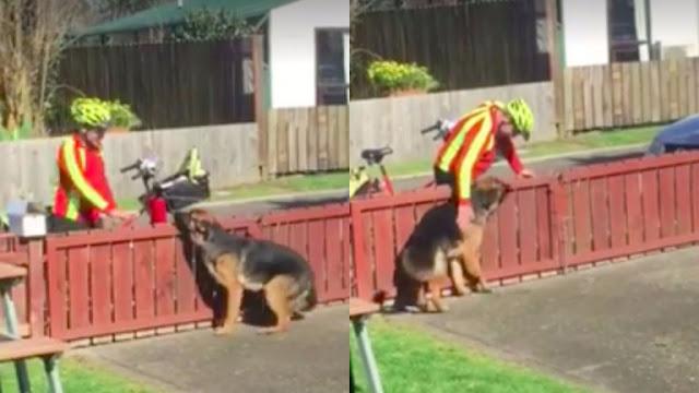 Κρυφή κάμερα έπιασε τον ταχυδρόμο να κάνει Αυτό σε ένα «επικίνδυνο» σκυλί. Την επόμενη ημέρα το Βίντεο είχε γίνει Viral