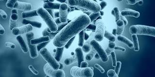 Bakteri diklasifikasikan menjadi sedikit jenis Klasifikasi Bakteri Berdasarkan Dinding Sel, Letak Flagel, Cara Hidup Lengkap Dengan Contohnya