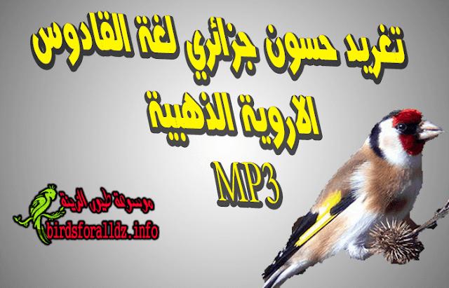 تحميل تغريد الحسون الجزائري القادوس  الاروية الذهبية mp3