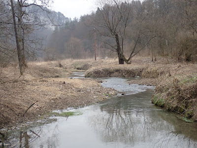 Ojcowski Park Narodowy, Dolina Sąspowska, grzyby 2019, grzyby zimowe, grzyby w Ojcowie