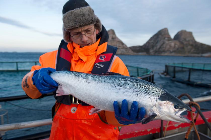 ANYO News: 【科技新鮭】科技養魚再進化!不用到挪威也能吃到在地鮮美鮭魚