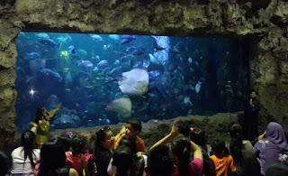 http://www.teluklove.com/2017/05/daya-tarik-objek-wisata-sea-world-ancol.html