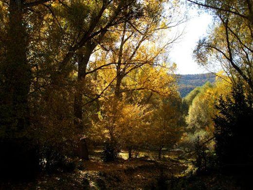 Foto de bosque para ilustrar el relato de Lamia