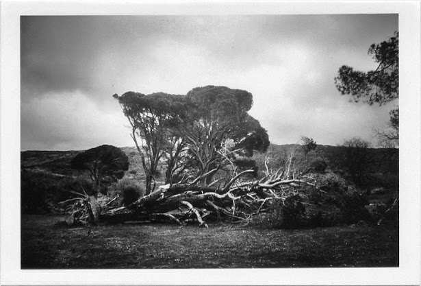 dirty photos - et - a black and white photo of fallen tree in arkadi