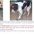ΤΩΡΑ ΓΙΑ ΥΙΟΘΕΣΙΑ! Θυμάστε πόσο καιρό ψάχναμε άρρωστο & τραυματισμένο σκυλάκι σε άθλια κατάσταση;