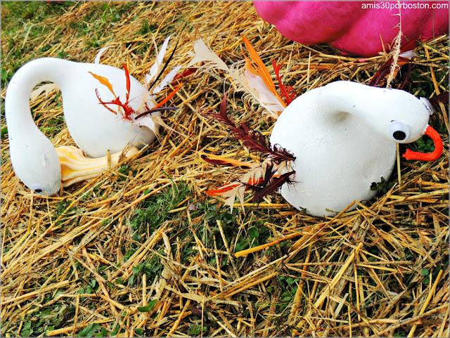 Calabazas Decoradas para Halloween: Cisnes