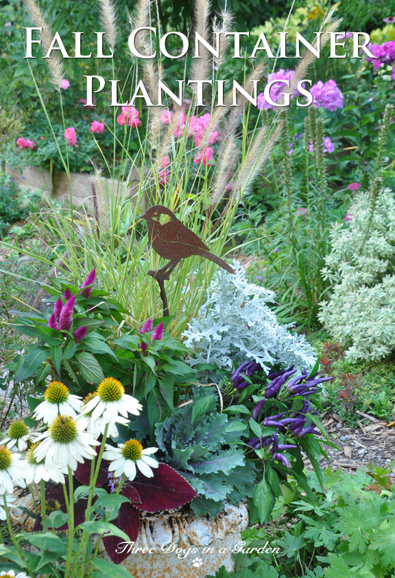 Fall Container Plantings Three Dogs in a