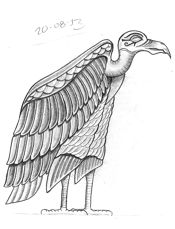 egyptian vulture drawing - photo #26