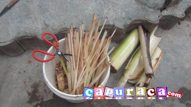 pakan alternatif untuk ayam, batang pisang, gedebok pisang