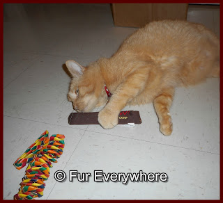 Carmine plays with his new Yeowww catnip cigar on the kitchen floor