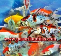 Pasar Ikan Hias Terlengkap Di Bekasi