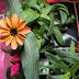 Uzayda Yetiştirilen İlk Çiçek