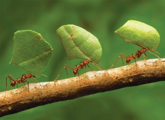 Kisah Lalat Dan Semut | Ubah Caramu Untuk Takdir Yang Berbeza
