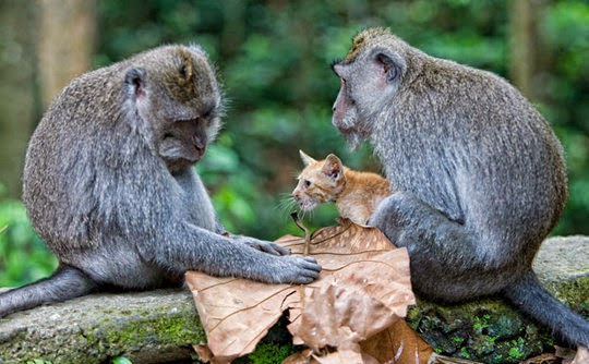 Monkey Forest Park Ubud