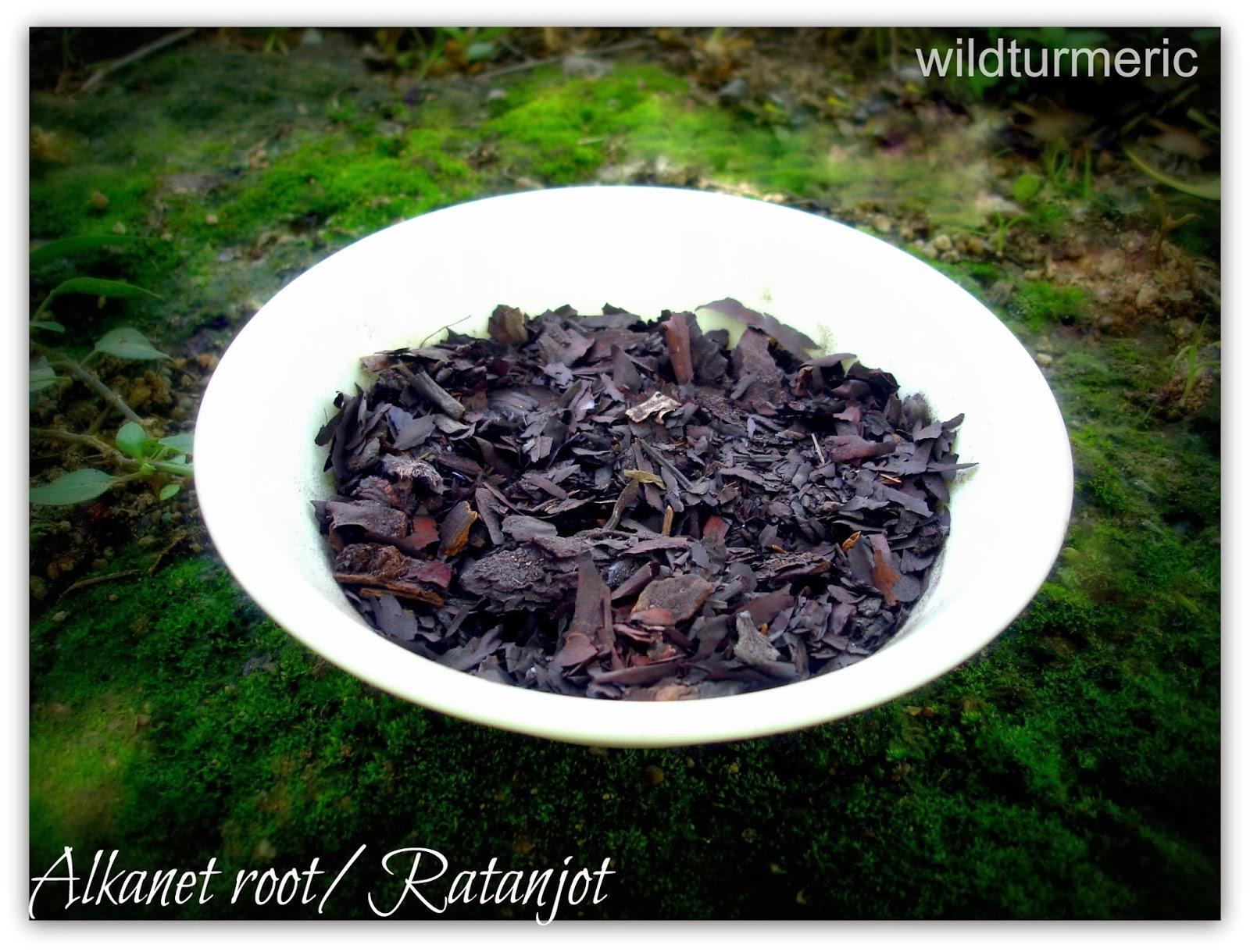 ratanjot hair oil recipe alkanet root hair oil wildturmeric