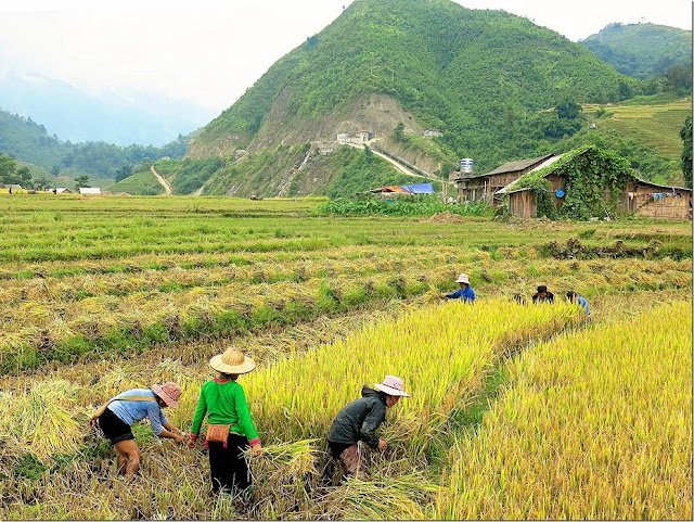 Some photos of Sapa during harvest season !