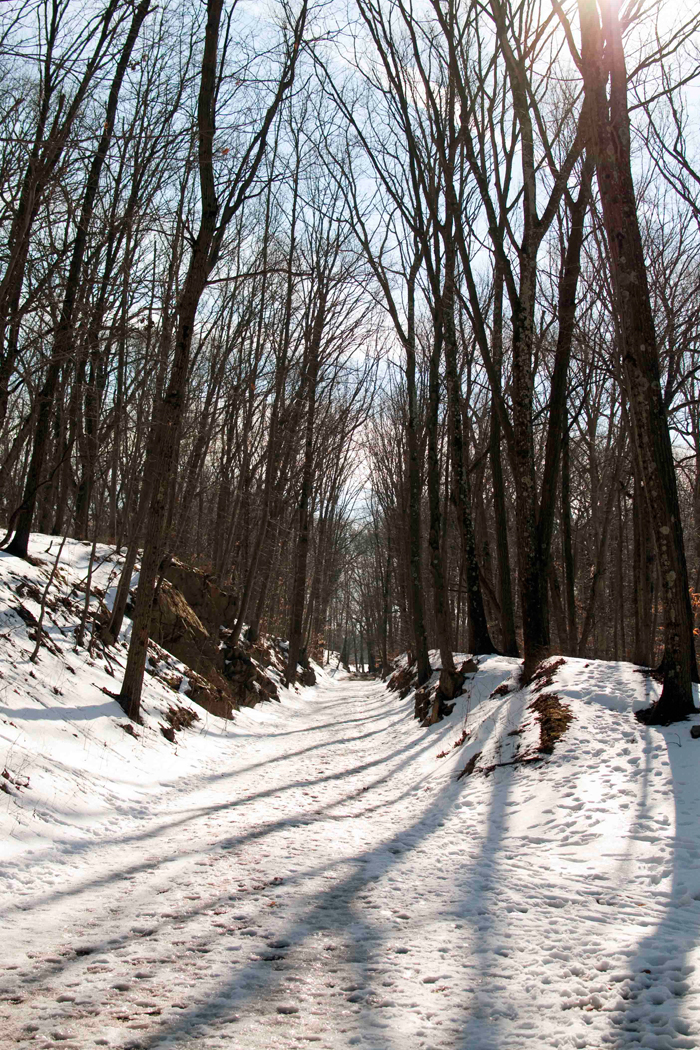 WINTER HIKE IN ROCKEFELLER STATE PARK