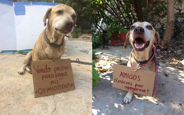 """Cachorro com câncer """"vende"""" bolos para pagar sua quimioterapia (Imagem: Reprodução/©Vanessa Euán/Facebook)"""
