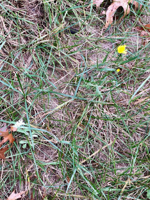 a pair of hard-frost holdouts, one white, one yellow