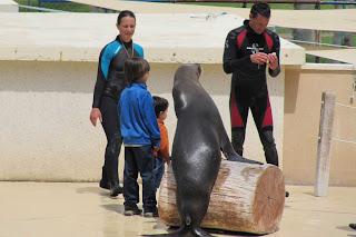 Izan y Joel JUNTO A UN león marino de Aquópolis.