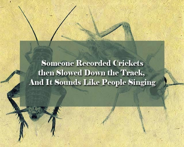 Someone Recorded Crickets then Slowed Down the Track, And It Sounds Like People Singing – UPDATE