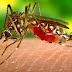 Apa yang Perlu Kita Ketahui Tentang Virus Zika?