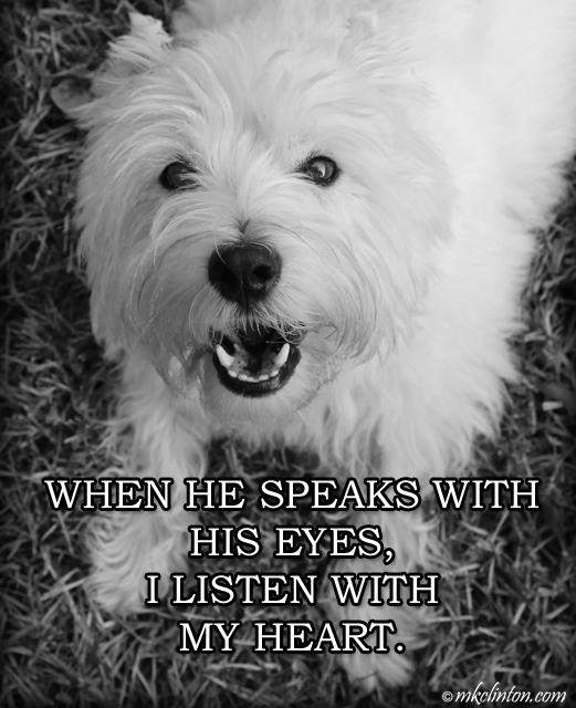 "Pierre Westie meme ""When he speaks with his eyes, I listen with my heart."""