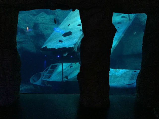 The wreak of the WWII sea plane replica in the Atlantic Ocean tank at the National Marine Aquarium in Plymouth