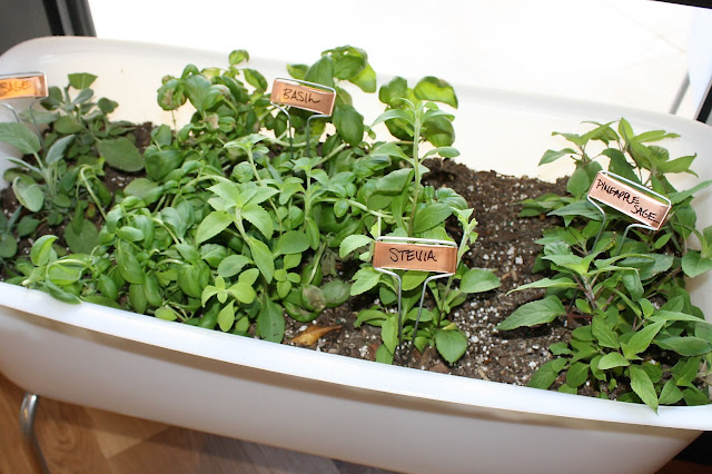 True Food Kitchen Mini Bathtub with Fresh Herbs