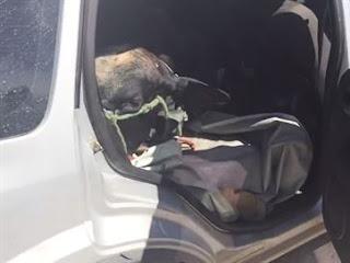 Polícia acha boi amarrado em carro após troca de tiros com bandidos, na Paraíba
