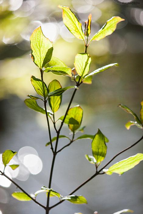 Natur erleben - Natur dekorieren