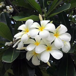 การใช้ประโยชน์จากพรรณไม้ดอกหอมชนิดต่าง ๆ ที่นิยมปลูกในประเทศไทย