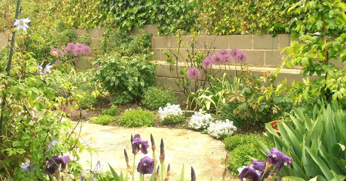 Los Allium. Protagonistas del jardín trasero a comienzos de mayo