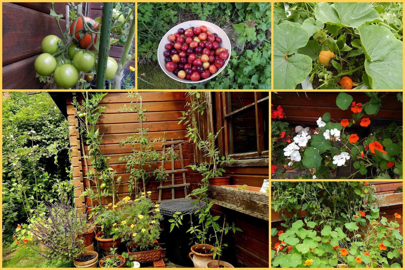 Garten Im September reisbluete veganblog biovegan gärtnern im september baumspinat