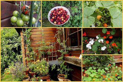Veganer Garten Anfang September