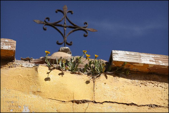 fotografia,naturaleza,flores,planta,cruz,ladrillo