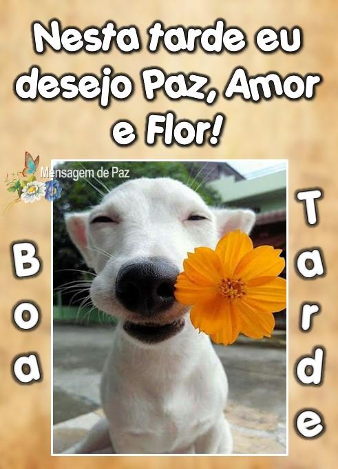 Nesta tarde eu   desejo Paz, Amor  e Flor!  Boa Tarde!