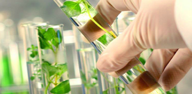 global bio succinic acid market Global bio-based succinic acid market anticipated to gain tremendous growth of 20% in cagr until the end of 2026 succinic acid one of the most important industrial chemical which is derived from petroleum feedstock.