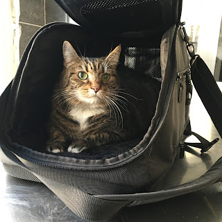 mallory update cats wanderlust budapest hungary vet