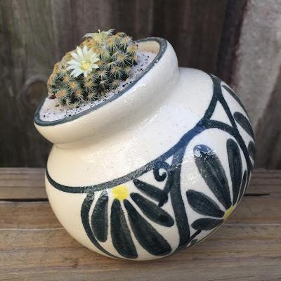 Mammillaria, Mammillaria schiedeana, Mammillaria cactus, cactus, cactus flower, flower, garden, plant