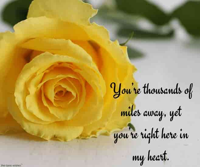 good morning text for her long distance with yellow rose