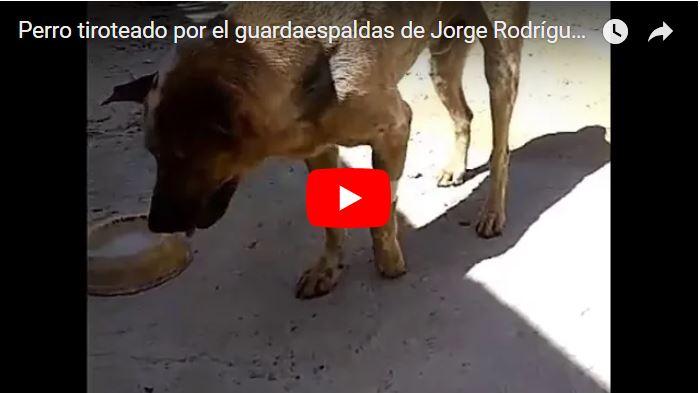 Perro tiroteado por el escolta de Jorge Rodríguez ya camina sin ayuda