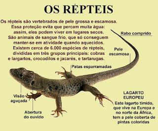 071f674ddf Os répteis são o resultado de evolução de vários grupos de animais hoje  existentes
