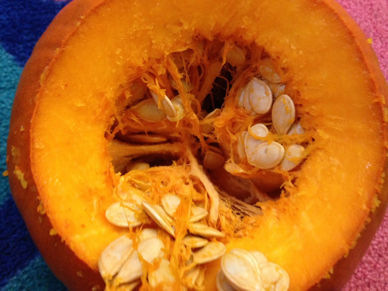 pumpkins, kindergarten science, October, pumpkin seeds, pumpkin life cycle