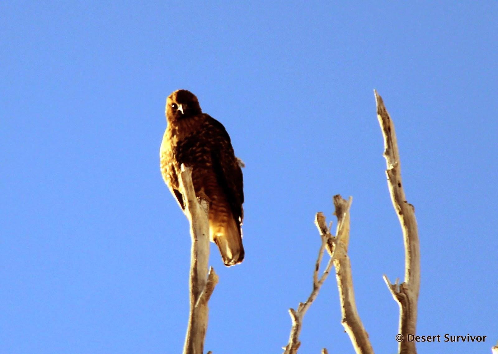 Survivor birds