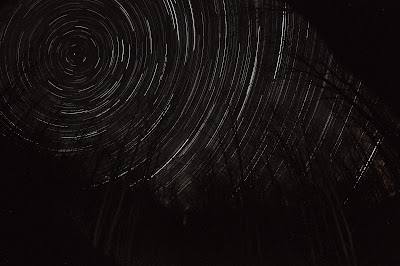 star trails and trees with subtle lighting in the foreground