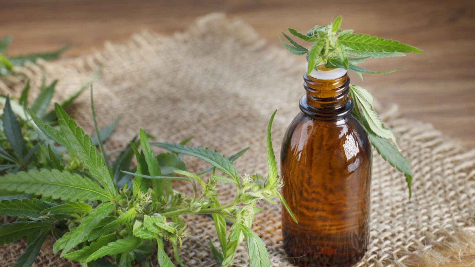 6 Things You Must Remember Before Travelling Overseas with CBD