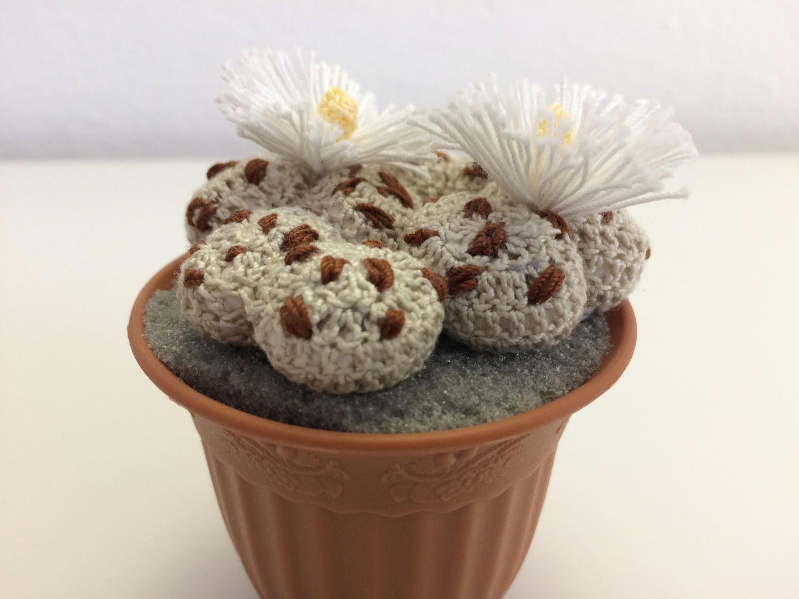 Il blog di sam spiegazione della pianta grassa lithops for Il blog di sam piante grasse