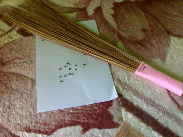 Cara Mengusir dan Membasmi Lalat dengan Mudah, Murah, Praktis dan Cepat