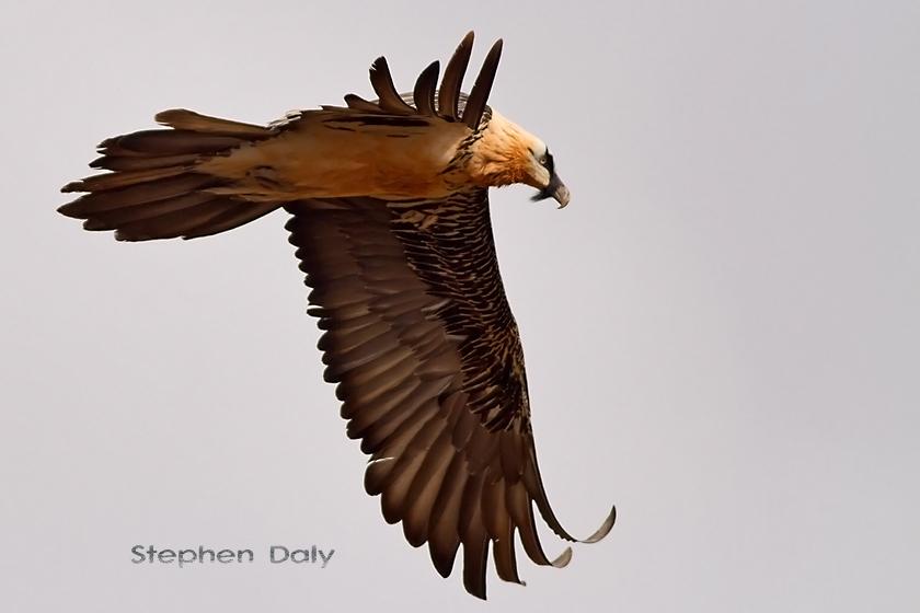Vultures in Spain